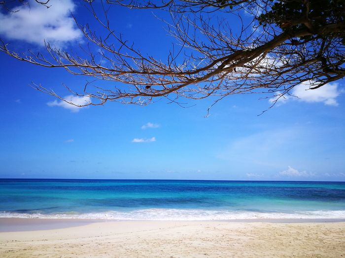 Sooooo Blue💙 at Long Bay, Jamaica Beach Sea Sand Nature Beauty In Nature Blue Sky Landscape Tranquility No People Cloud - Sky Travel Destinations Branch Tree Vacations Outdoors Capture The Moment EmEyeNewHere Lifeisbeautiful Relaxation Travel Vacations Beauty In Nature Tranquility Nature Lost In The Landscape Perspectives On Nature Be. Ready. Adventures In The City