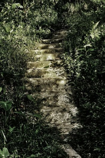 Creepy Stairs Eyeem Philippines Outdoor Photography Nikonphotography Nikon Collection Nikon D90 Full Frame Backgrounds Day Nature Outdoors Reflection Shadow