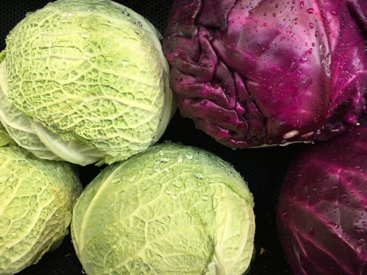 Cabbage Close-up Food Food And Drink Freshness Full Frame Green Color Group Of Objects Healthy Eating High Angle View Indoors  Medium Group Of Objects No People Organic Pink Color Purple Still Life Vegetables Wellbeing