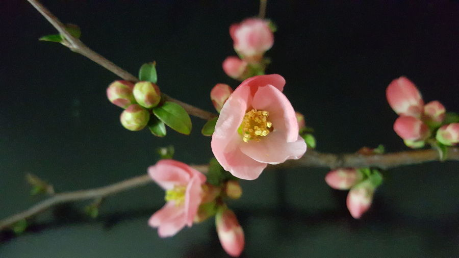 Close-up of pink flowers blooming indoors