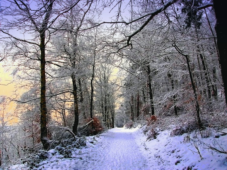 A path leading through the Teutoburg Forest in North Rhine-Westphalia, Germany Teutoburg Forest Bare Tree Beauty In Nature Branch Cold Temperature Day Forest Germany Landscape Nature No People Outdoors Road Scenics Sky Snow Tranquil Scene Tranquility Tree Weather Winter