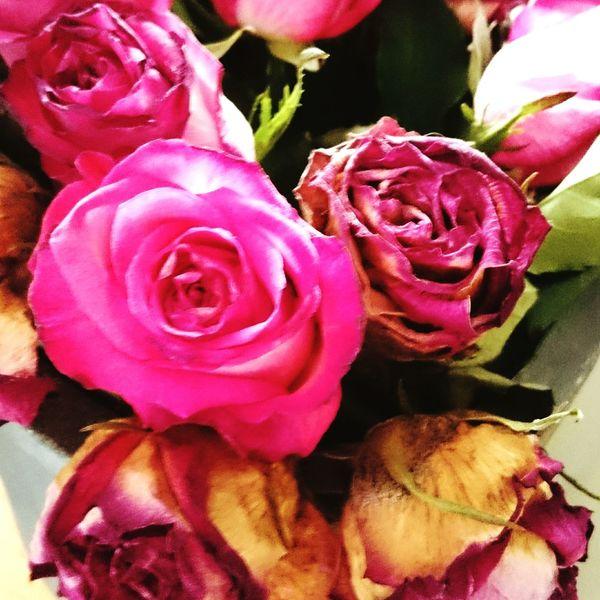 As time goes by.... Roses Flower Endings & Beginnings Eyeemphotography Eyemflowers