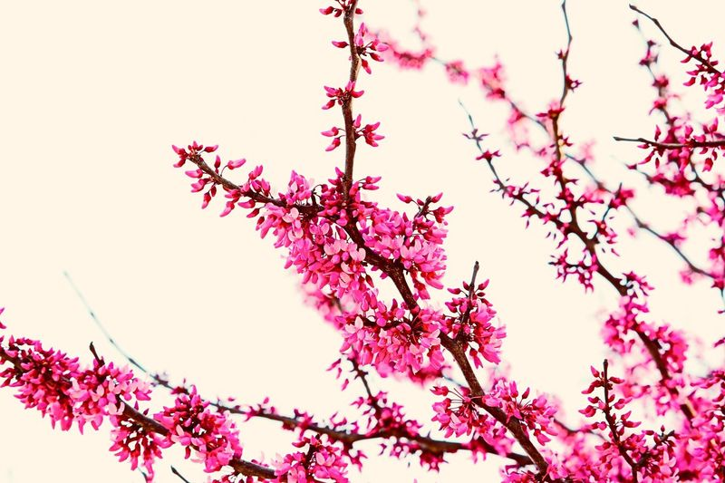 🌸🌸 Branch Low