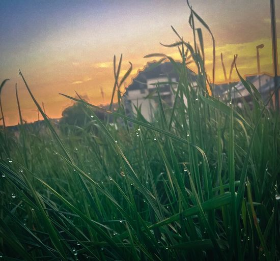 Grass Grass And Sky Erva Morning Morning Sky Iphonephotographyschool Iphoneonly Iphone6s Spring Has Arrived Luxembourg_Collection Iphonephotography Iphonephotoacademy Luxembourg In Photos  IPhone Editing IPhone Photography IPhoneography