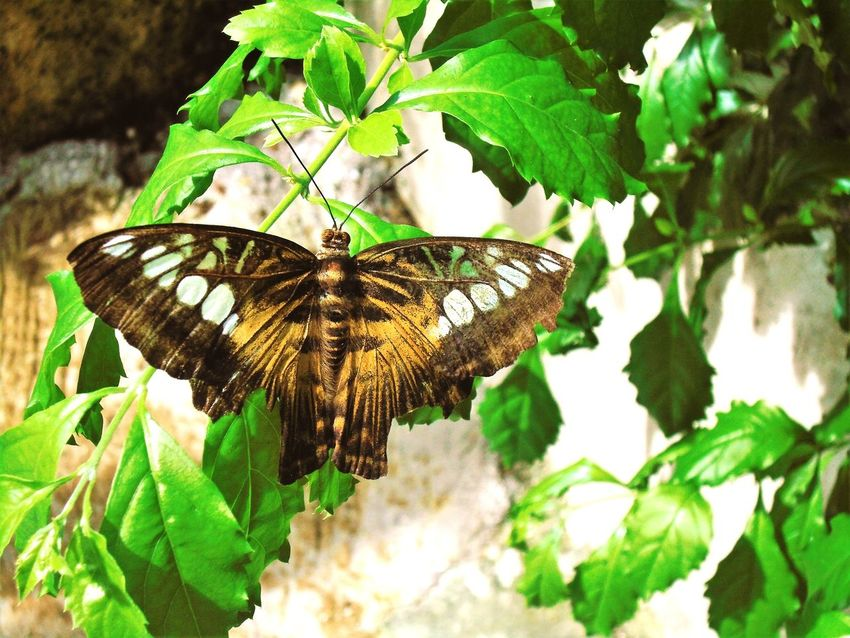 Sanctuary Butterfly - Insect Insect Leaf Animals In The Wild Plant Animal Themes One Animal