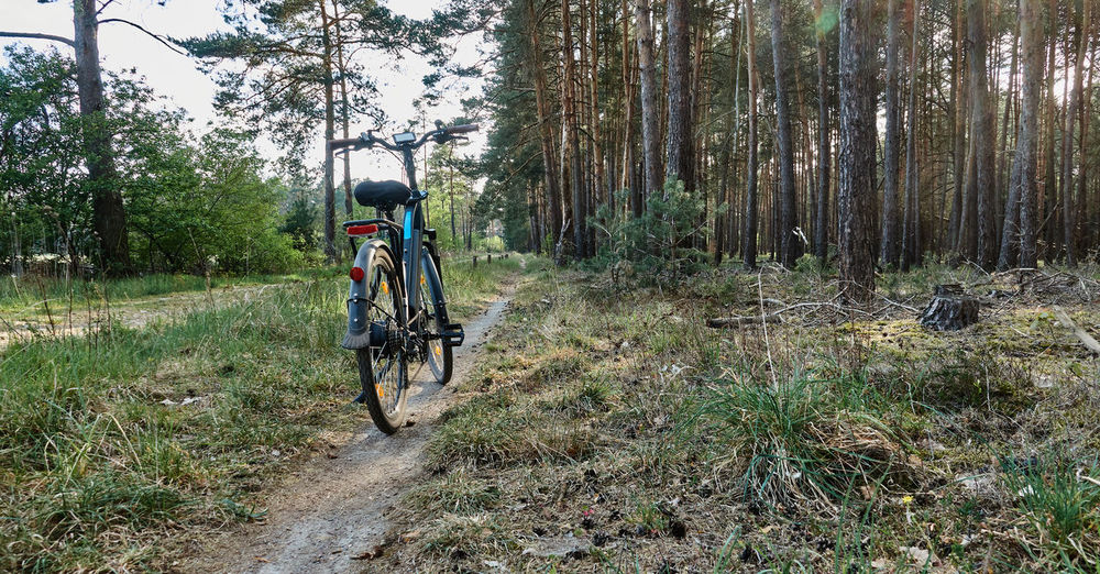 Rear view of bicycle on road amidst trees in forest