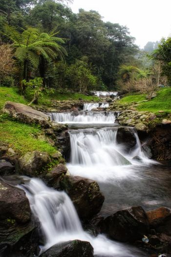 River in Mount Gede Pangrango National Parkis a national park inWest Java,Indonesia Green River INDONESIA Gunung Gede Pangrango West Java,Indonesia Tree Water Waterfall Forest Fog Sky Landscape Flowing Water Long Exposure Light Painting Stream - Flowing Water Flowing