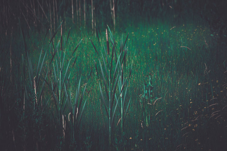 In the reed Reed Reed - Grass Family Reeds Green Nature Outdoors Plant Growth Green Color Tranquility Land Grass No People Beauty In Nature Field Day Tranquil Scene Landscape Water Scenics - Nature Full Frame Backgrounds Blade Of Grass