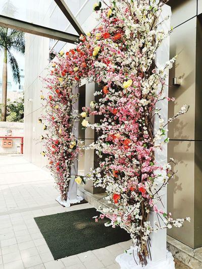 Flowering plants at flower pot