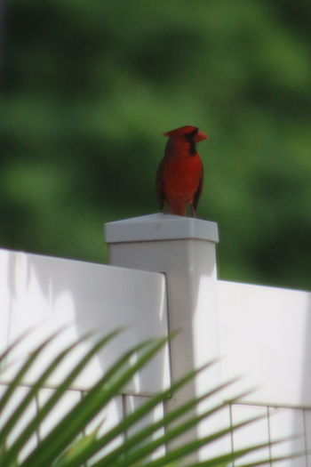 Animal Animal Themes Animals In The Wild Bird Focus On Foreground One Animal Orange Beak Orange Reddish Bird Perching Selective Focus Sparrow Wildlife