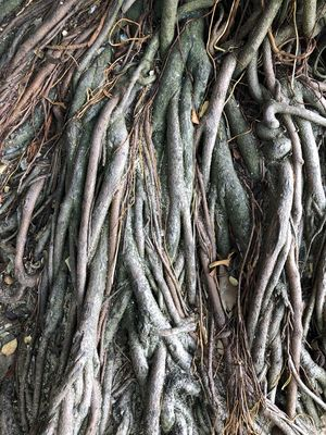 abstract beauty of the roots not many people noticed Abstract Photography Textured  Abstract Close-up Detailed Intertwined Nature Root Rootedstreets