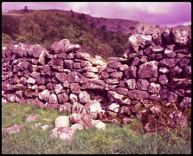Stone wall of pink flowering plants on land