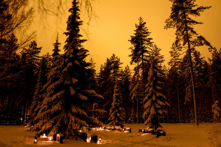 Trees and illuminated lights at cemetery on snow covered field at sunset