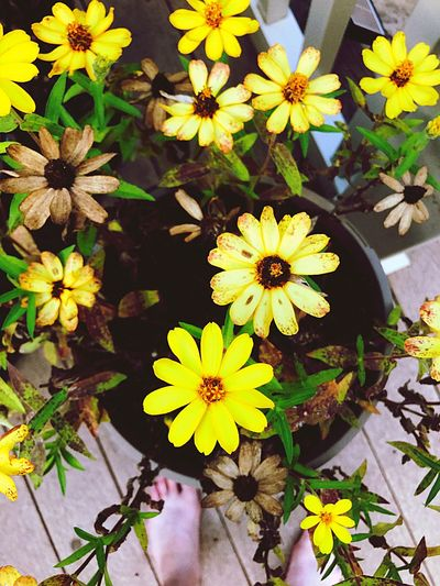 Flower Growth Nature Petal Plant Yellow Freshness Fragility Beauty In Nature No People Flower Head Blooming Outdoors Day Close-up Neon Life