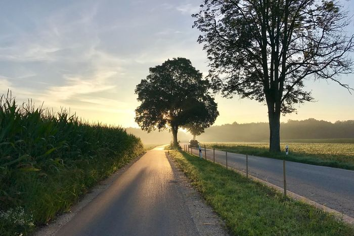 In the morning on the way to work. Tree Road The Way Forward Diminishing Perspective Sky Nature Scenics Growth Tranquil Scene Tranquility Landscape No People Outdoors Cloud - Sky Transportation Grass Day Beauty In Nature Rural Scene