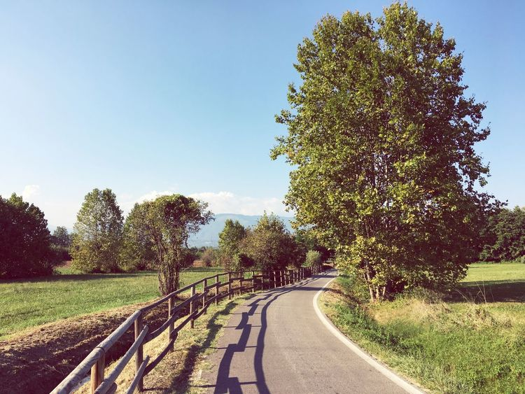 Tree The Way Forward Clear Sky Summer Road Bike Tranquil Scene Veneto Italy