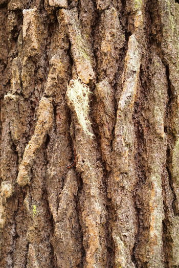 Tree Oldtree Nature Nature Photography Crawling Milipede Hiddenanimals Animals Gofigure No People Sonypicture Bark Barktexture Bark Of A Tree