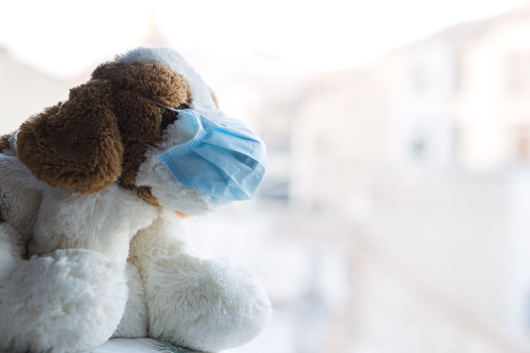 Close-up of stuffed toy on snow
