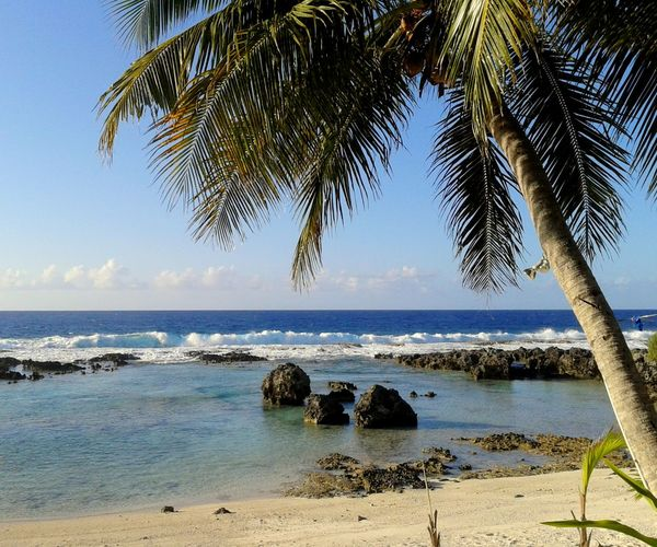 Beach in Songsong, Rota Water Sea Beach Tropical Climate Land Sky Palm Tree Tree Horizon Beauty In Nature Plant Nature Horizon Over Water Scenics - Nature Tranquility Sand Outdoors Growth Tranquil Scene Coconut Palm Tree Rota Songsong, Rota Beaches On Rota, CNMI Northern Mariana Islands