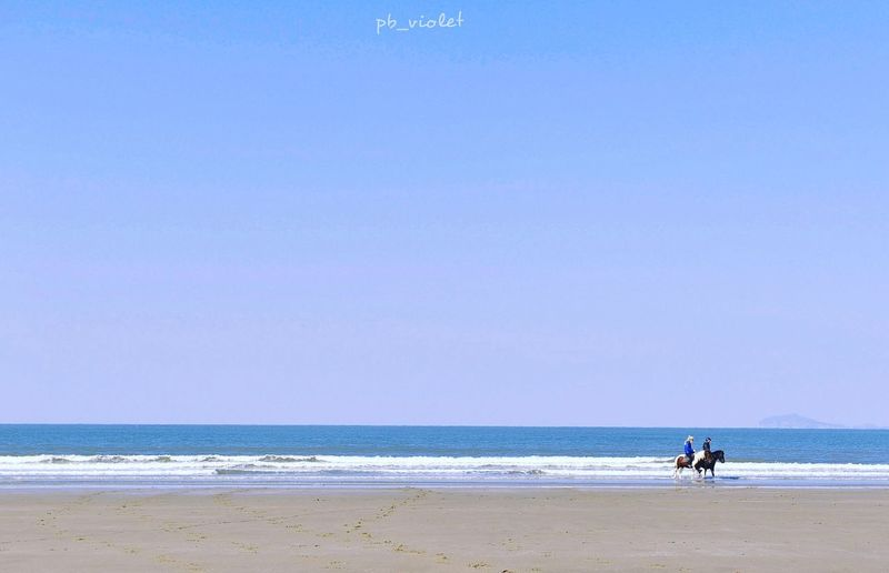 The Great Outdoors With Adobe 신두리해변 Sea Beach Seaside Coast Ocean View Blue Horse Riding Leisure Nature South Korea Landscape Travel Horizon Over Water Minimalism Landscapes With WhiteWall 신두리 바다 승마 D800