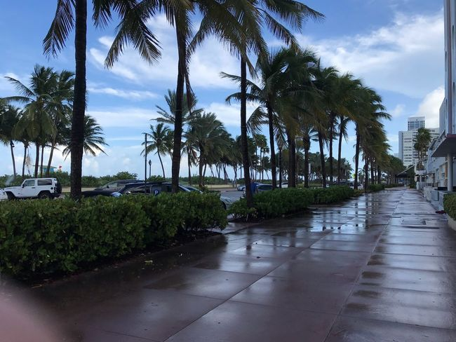 North Beach Rain Nofilter Path Forward Sidewalk Boardwalk Cloud - Sky Photography Cloudscape Florida Tree Plant Water Sky Nature Growth Cloud - Sky Beauty In Nature Day Palm Tree Tranquility Green Color Wet No People Outdoors Tropical Climate Tranquil Scene Rain Scenics - Nature Tropical Tree