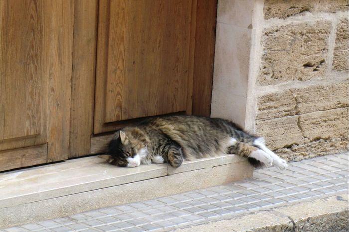 Hello_Kitty #nofilter#noedit Hello Cat