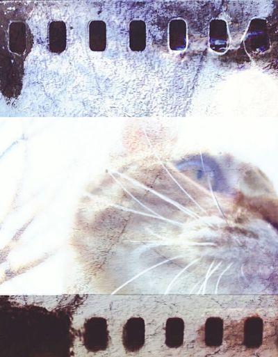 Werekitteh.... where kitteh? Nature's Diversities Samsungphotography Close-up Cat Kitteh Peaceful