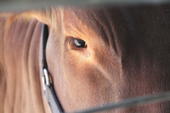 Horse EyeEm Eye4photography  Eye Eye Of The Beast At The County Fair At The Fair
