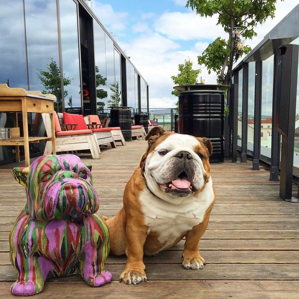 EnglishBulldog Statue Dog Dogslife Taking Photos Bluesky Hanging Out Dachboden Check This Out