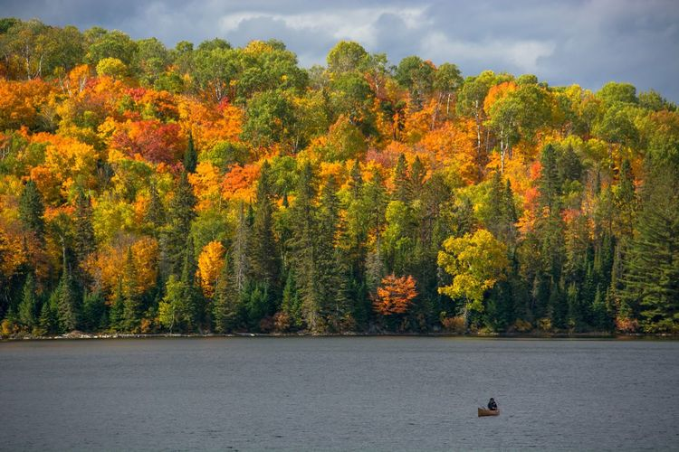 Tea Lake, Algonquin Park, Ontario 📍 One Person Loneliness Freedom Solitude Lone Canoeist Canoe Canoeing Tranquil Scene Backgrounds Landscape Nature Photography Landscape_photography Outdoors Tranquility Forest Beauty In Nature Canadian Landscape Nature Tree Golden Leaves Fall Season Fall Leaves Fall Colors Fall Beauty Fall