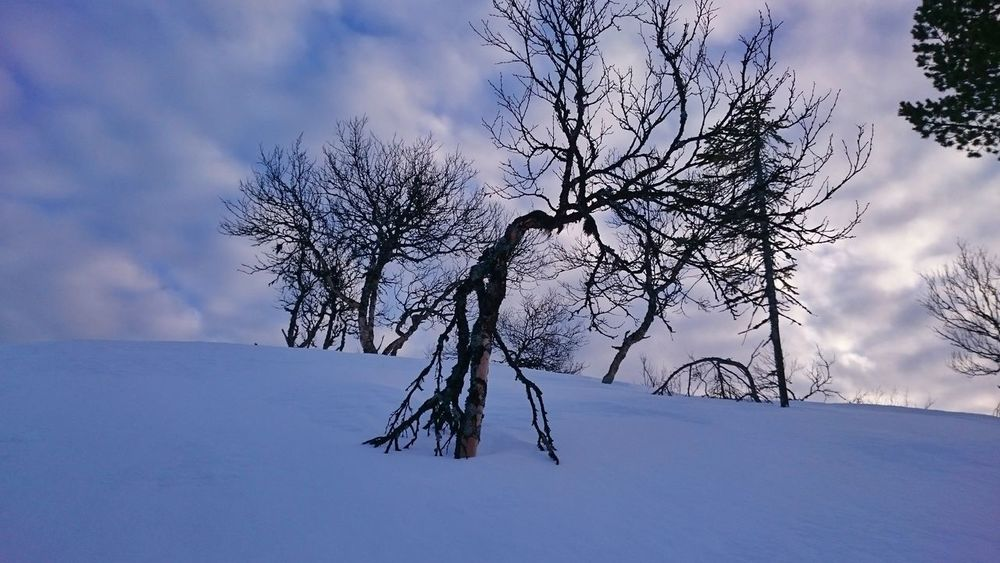 Tree Nature Scenics Beauty In Nature Outdoors Landscape Grövelsjön Winter Sky Vacations
