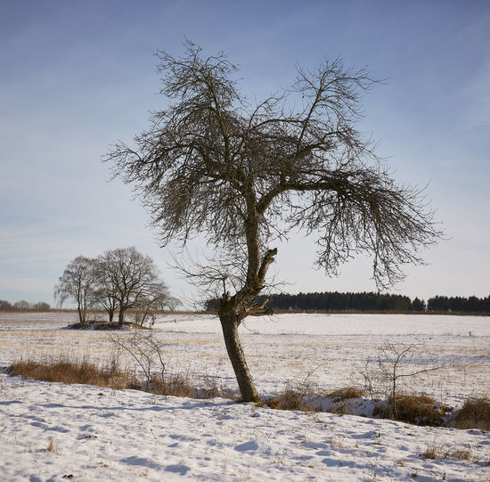 Bare tree on snow covered field against sky