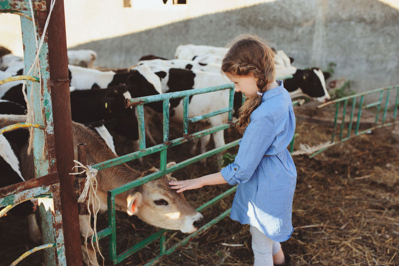 Side view of girl touching calf in farm