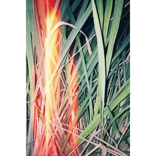 Leaf Plant Film Photography 35mm 35mm Film Photo Graphy Nature First Eyeem Photo
