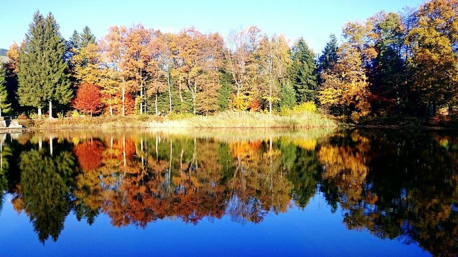 Autumn Autumn Colors Lake Nature