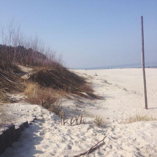 Dry plants on sand at beach against sky
