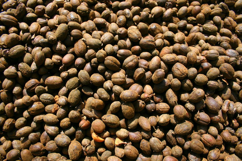Healthy Eating Full Frame Freshness Food And Drink Day Food Coffee Bean Backgrounds Close-up Coffee Still Life Large Group Of Objects No People Raw Coffee Bean เมล็ดกาแฟ Selective Focus Outdoors