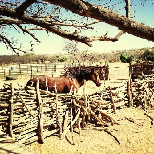On The Road I Wanna Be A Cowboy Divedomestik
