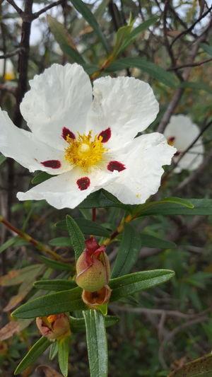 Eyem Nature Lovers  Flower from Alentejo