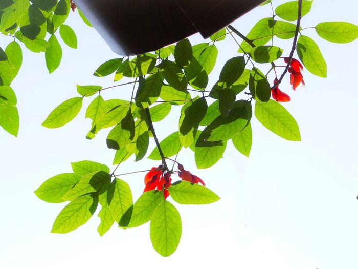 Flower Portrait Zhongshan Guangdong China