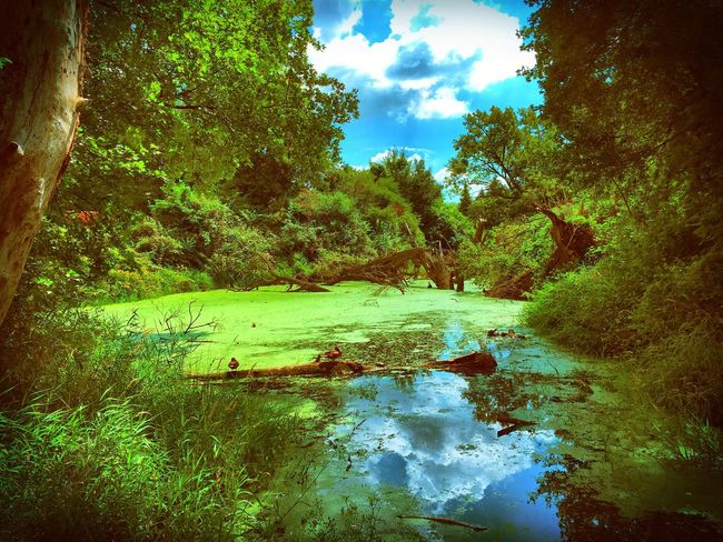 Water Tranquility Tree Tranquil Scene Scenics Stream Forest Nature Tree Trunk Beauty In Nature Non-urban Scene Sky Reflection Green Color Growth Day Cloud - Sky Outdoors Green No People