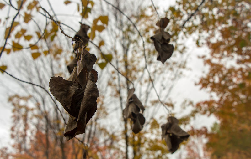 Low angle view of bird flying over dry leaves