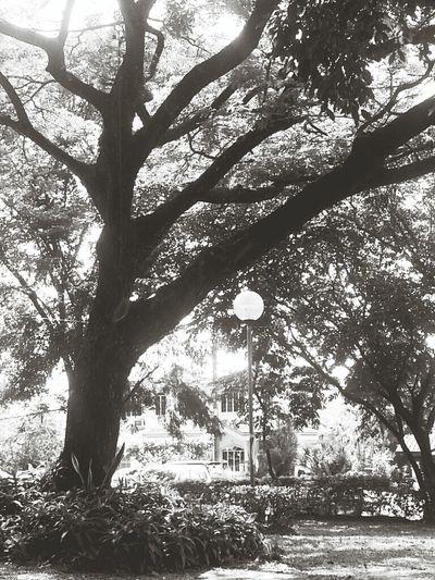Taking Photos Black&white Relaxing