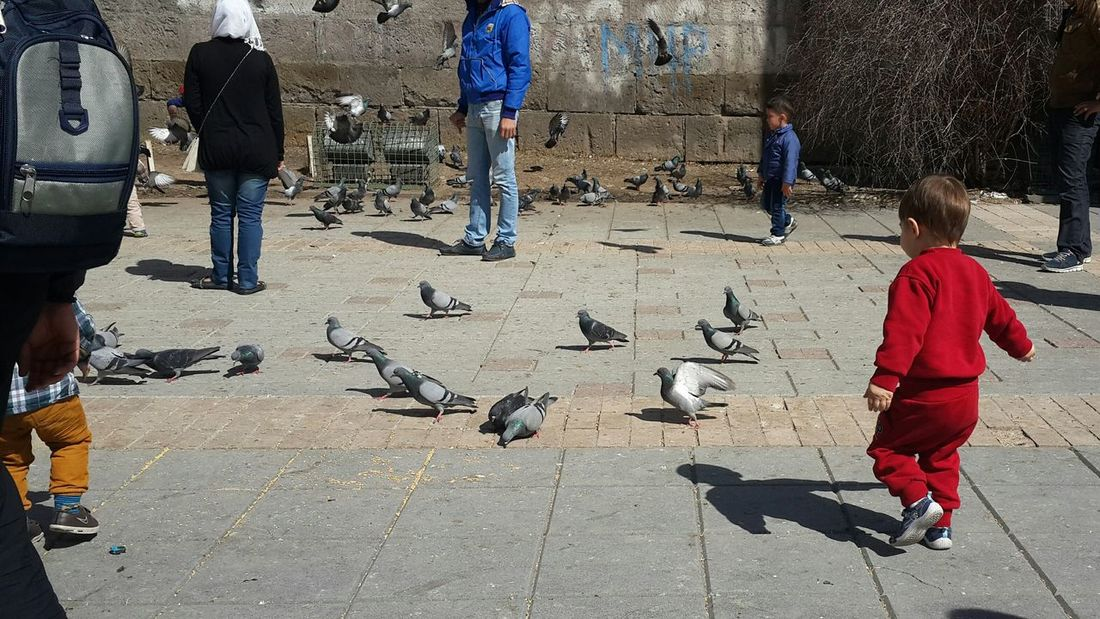 Pigeons Kids Happiness Smile