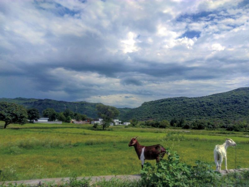 Landscape Grass Animal Cloud - Sky No People Beauty In Nature Grazing Nature Sheep Animal Themes Mountain Mammal Domestic Animals Sky Outdoors Day Pakistan EyeEmNewHere Green Color Scenics Beauty In Nature Clouds And Sky Clouds And Sky Nature Clouds Greenery Freshness EyeEmNewHere