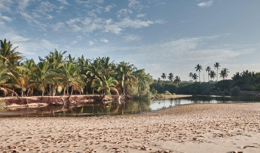 Matara Palm Palm Tree SriLanka Blue Sky Fujifilm Fujifilm_xseries Paradise Srilankatravel Tropical