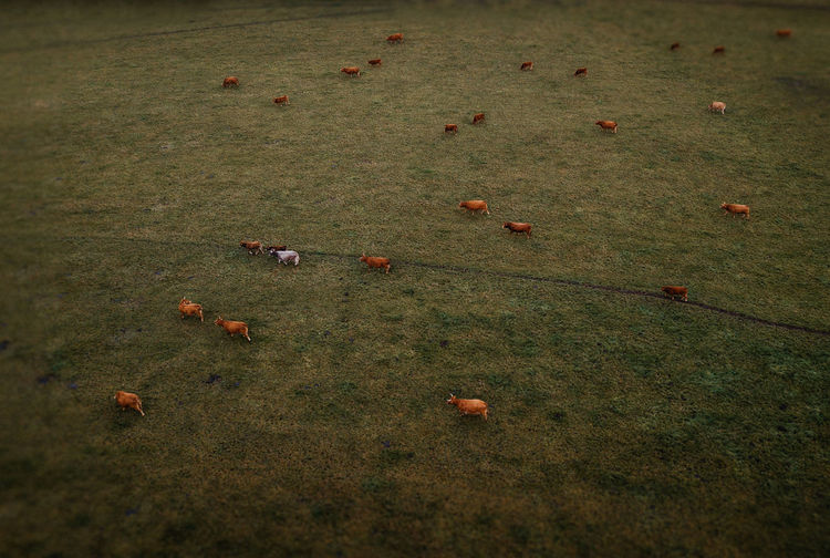 High angle view of crab on field