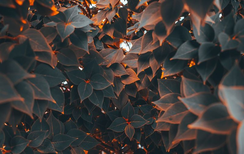 Full frame shot of leaves