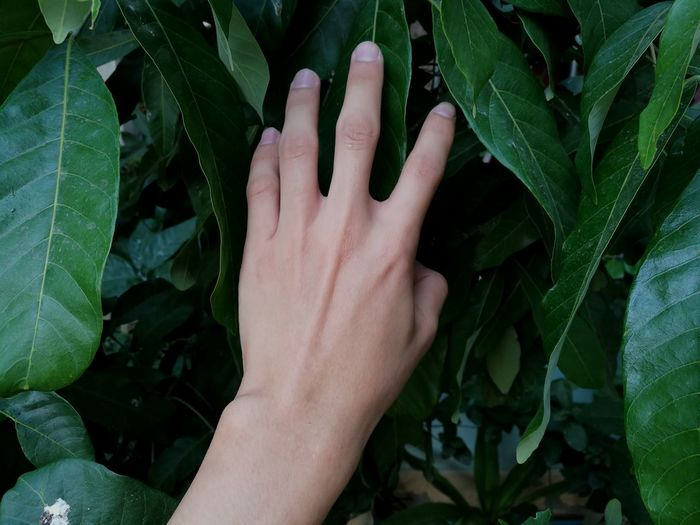 Green Natural Background Day Outdoors Human Hand Leaf Hiding Hand Palm Close-up