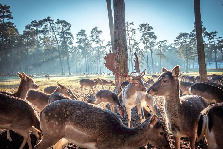 Herd of deers against trees